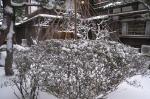 garden_w03