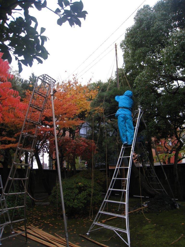 庭園実技講習「松と高木の剪定」2018の画像